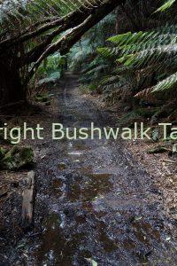 Montezuma Falls Bushwalk