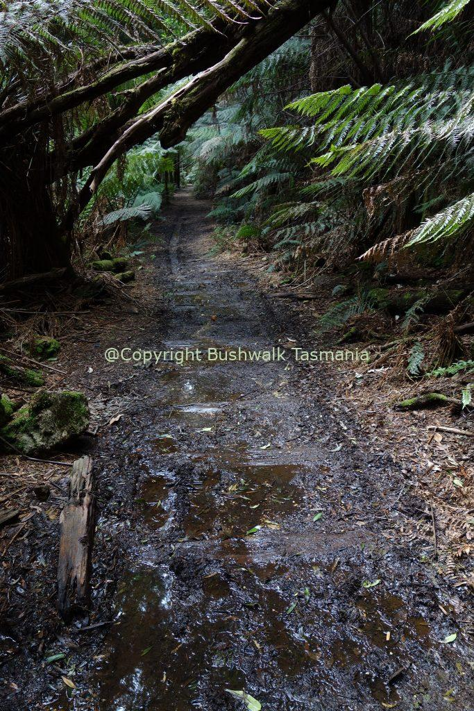 montezuma falls walk tasmania