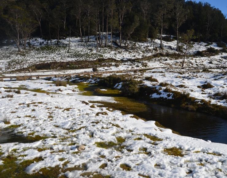Enchanted Walk Cradle Mountain