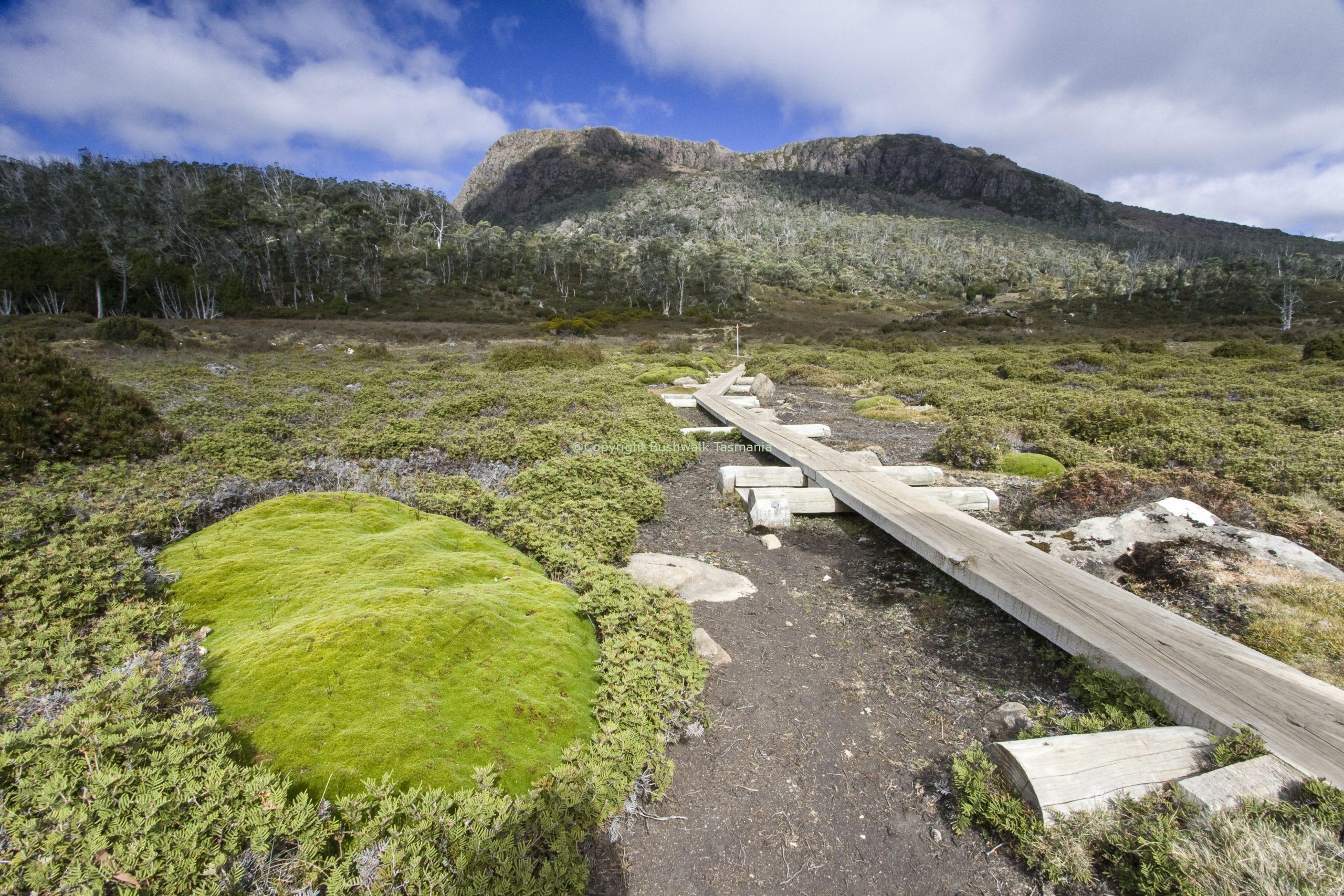 Pine Lake Walk - Bushwalk Tasmania